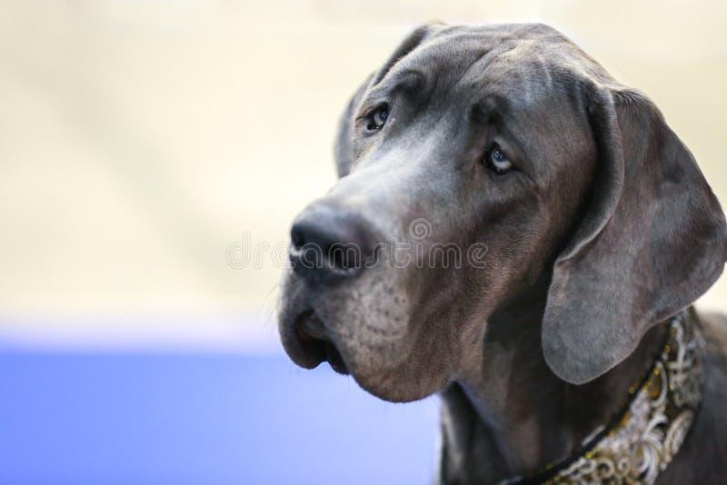 Portrait de chien mignon sur le fond brouillé, photographie stock
