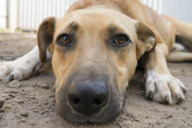 Portrait de chien réfléchi photo stock