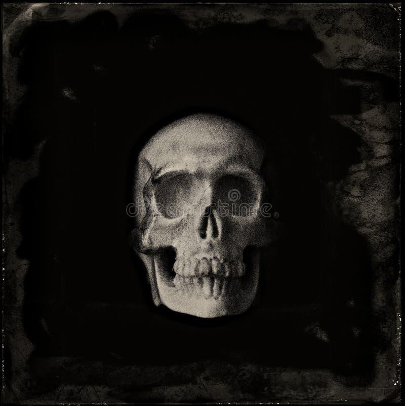 Portrait de crâne photographie stock libre de droits