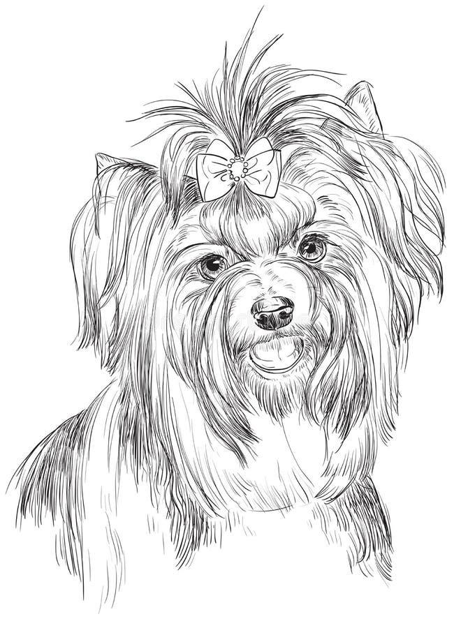 Portrait de dessin de main de vecteur de terrier de Biewer illustration libre de droits