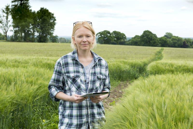 Portrait de femme avec la tablette par un champ de blé images stock