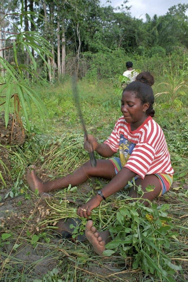 Portrait de femme pendant la moisson des arachides photographie stock libre de droits