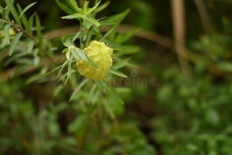 Portrait de fleur dans le sauvage photographie stock