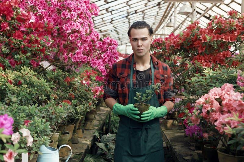 Portrait de fleuriste masculin beau dans des vêtements de travail photos stock