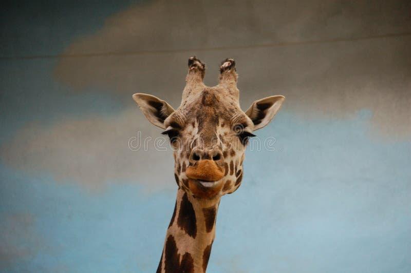 Portrait de girafe dans le zoo images libres de droits