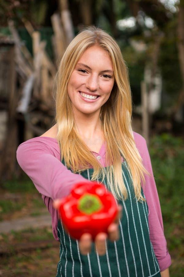 Portrait de jardinier heureux offrant le paprika rouge frais au jardin images libres de droits