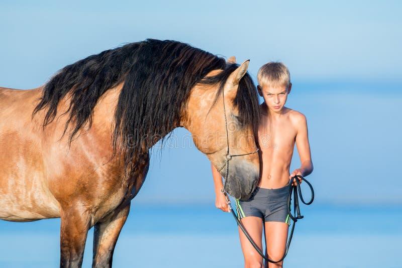 Portrait de jeune cavalier sérieux avec le cheval dans le coucher du soleil image libre de droits