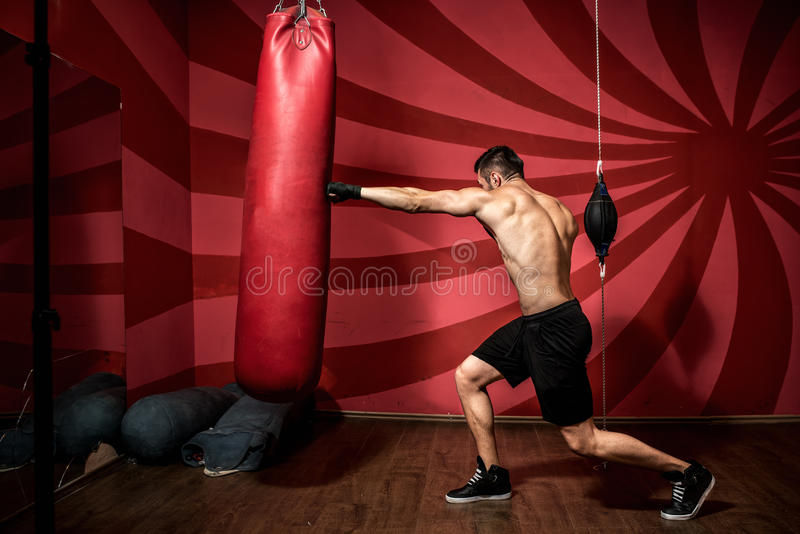Portrait de la formation masculine de boxeur avec des gants et sans chemise Formation de boxe image stock