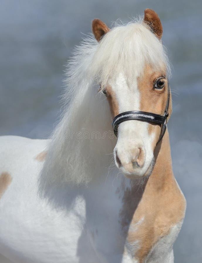 Portrait de la peinture American Miniature Horse image libre de droits