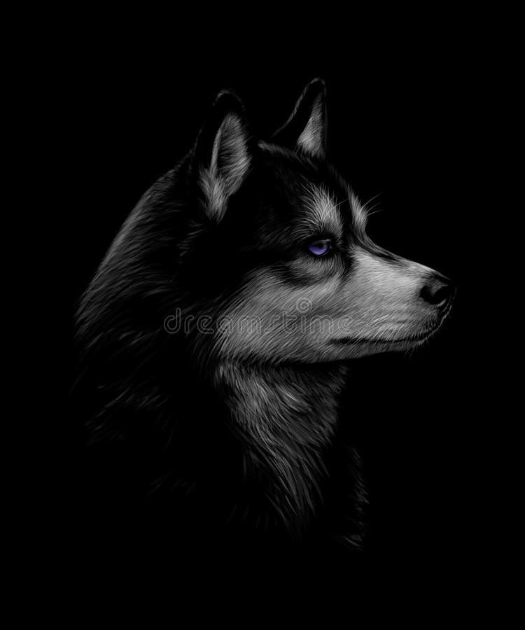 Portrait de la tête du chien de traîneau sibérien avec des yeux bleus illustration libre de droits