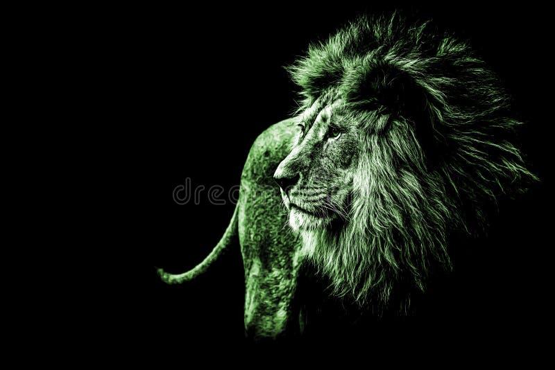 portrait de lion dans des couleurs vert clair photos libres de droits