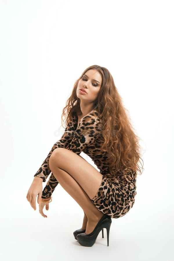 Portrait de mode de jeune fille de brune dans la robe de léopard photo stock