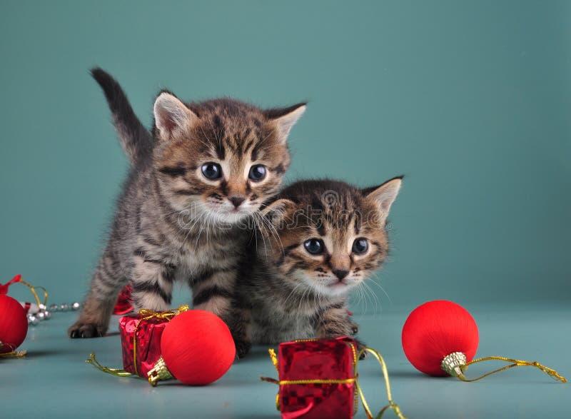 Portrait de Noël de petits chatons mignons. photo stock