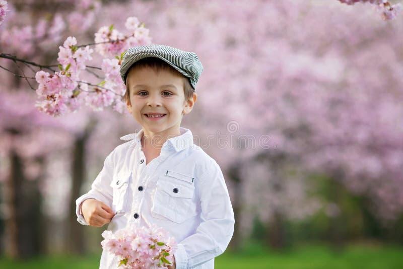 Portrait de petit garçon adorable dans un jardin d'arbre de fleurs de cerisier, photo libre de droits