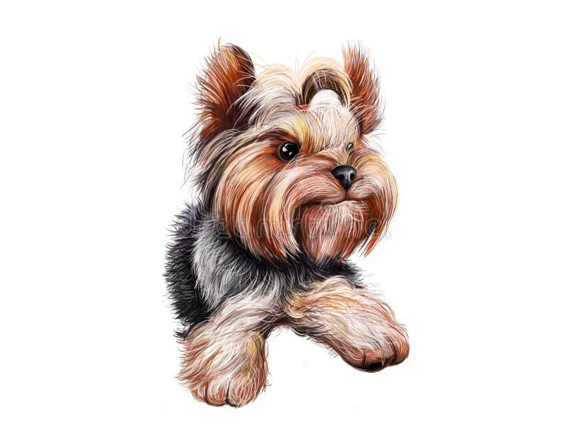 Portrait de plan rapproché d'aquarelle du chien mignon de race de Yorkshire Terrier d'isolement sur le fond blanc Petite race de  illustration de vecteur