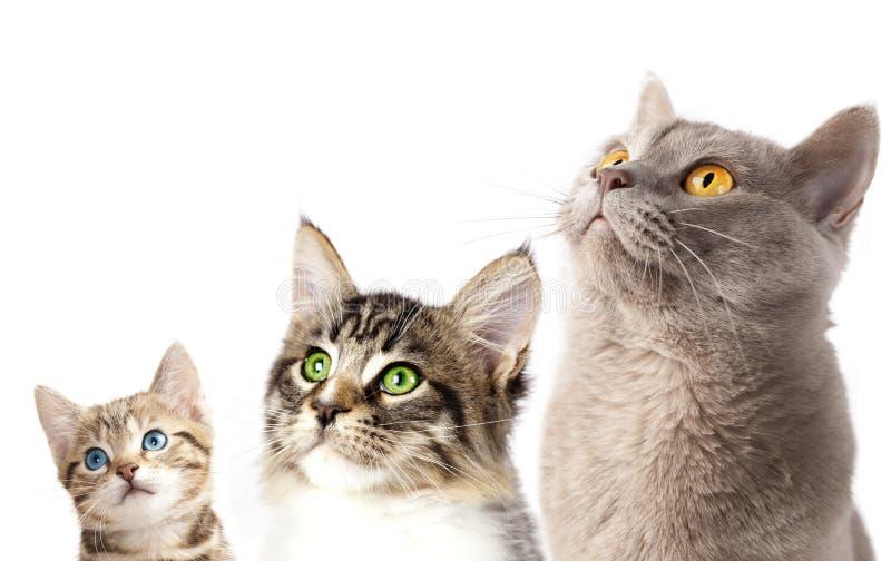 portrait de plan rapproché de 3 chats images libres de droits