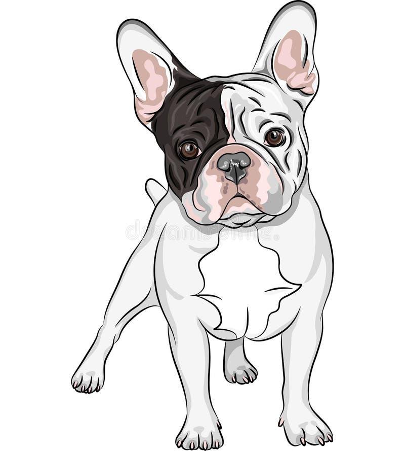 Race de bouledogue français de chien domestique de croquis de vecteur image libre de droits