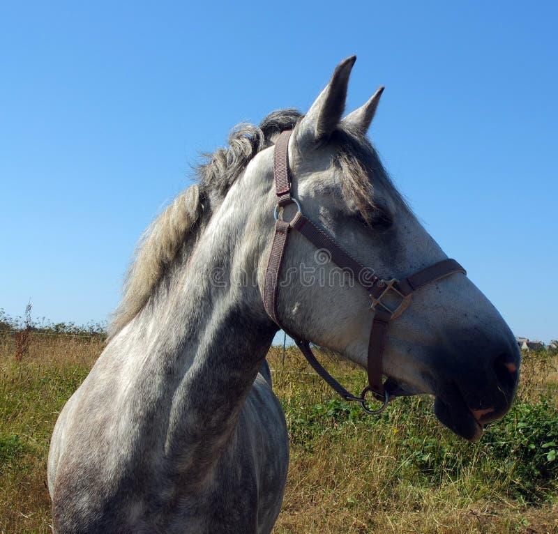 Portrait de tête de profil de cheval photo libre de droits