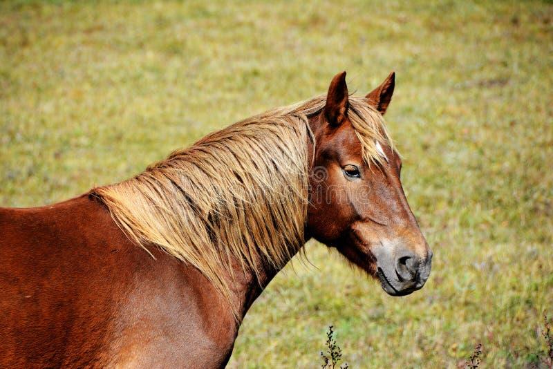 Portrait de tête de profil de cheval image stock