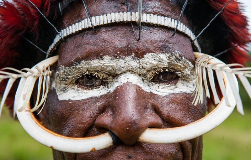 Portrait de tribu de Dani dans une belle coiffe faite de plumes photo stock