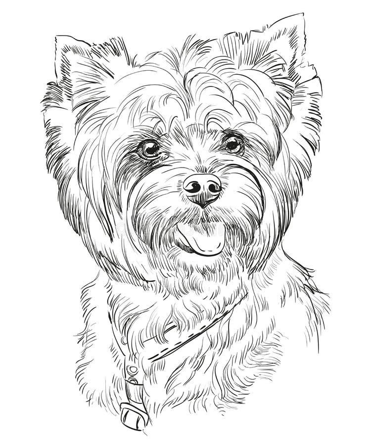 Portrait de vecteur de dessin de main de Yorkshire Terrier illustration de vecteur