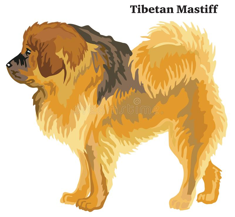 Portrait debout décoratif coloré de mastiff tibétain illustration de vecteur