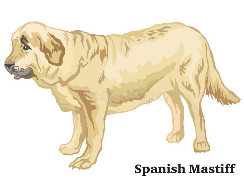 Portrait debout décoratif coloré de vect espagnol de mastiff de chien illustration stock
