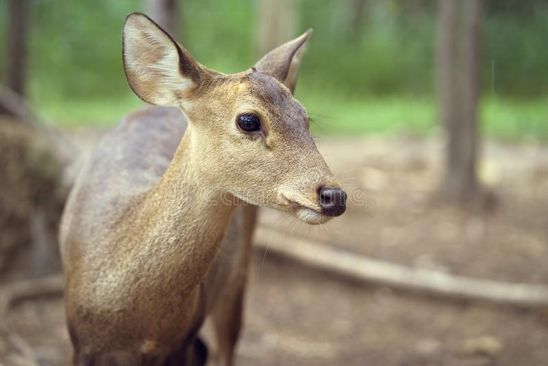 portrait debout de jeunes cerfs communs dans la forêt images libres de droits