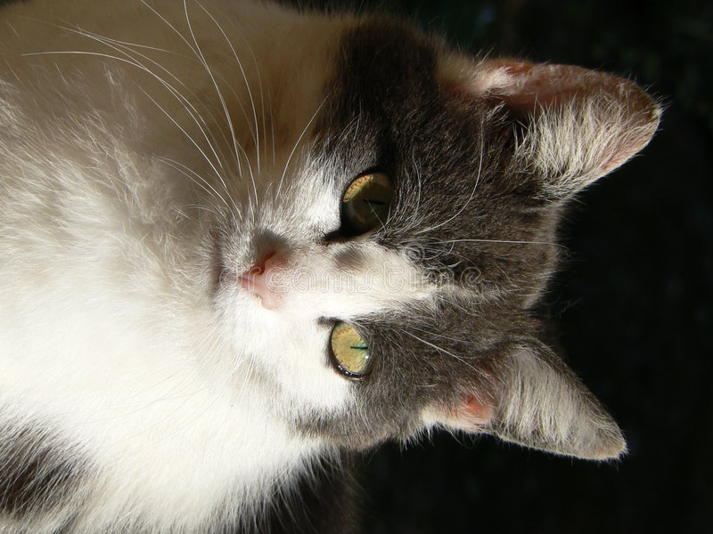 Portrait der Katze stockfotografie