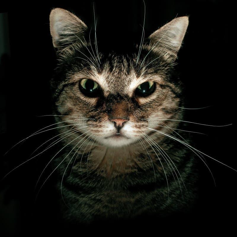 Portrait der Tabby-Katze stockfoto