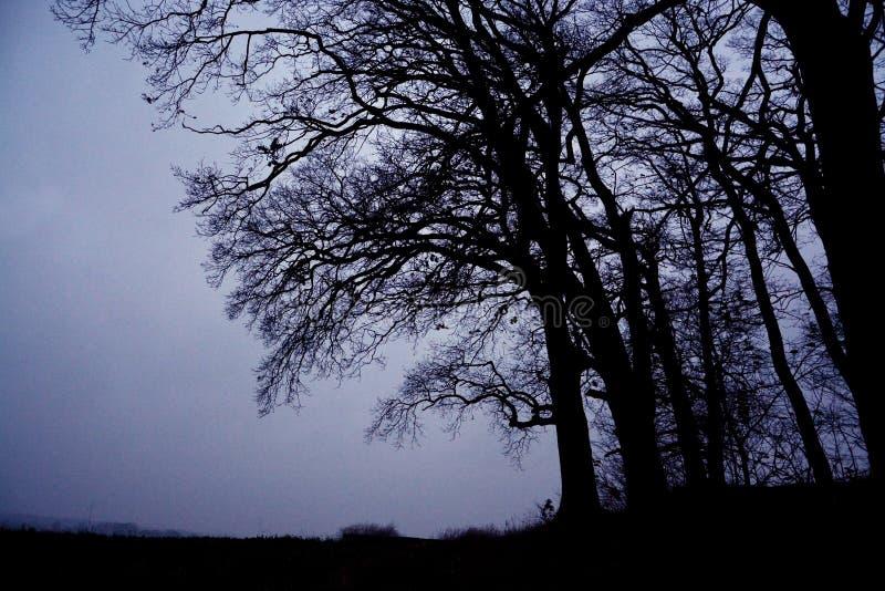 Portrait des arbres images libres de droits