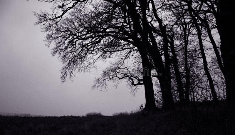 Portrait des arbres photographie stock