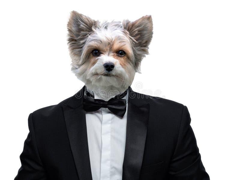 Portrait des chiens dans un costume photos libres de droits