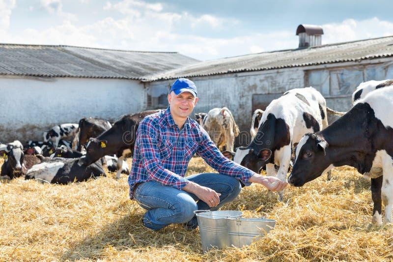 Download Portrait Des Vaches De Alimentation à Technicien Vétérinaire à La Ferme Image stock - Image du alimentation, étable: 77156831