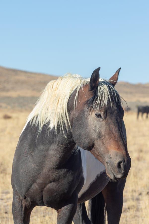 Portrait des wilden Pferds lizenzfreies stockfoto