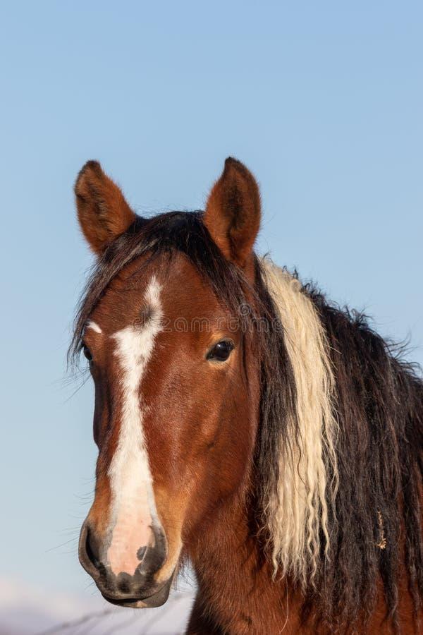 Portrait des wilden Pferds stockbild