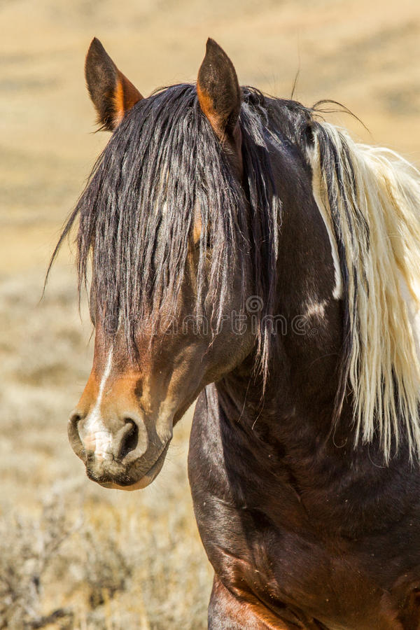 Portrait des wilden Pferds stockfotografie