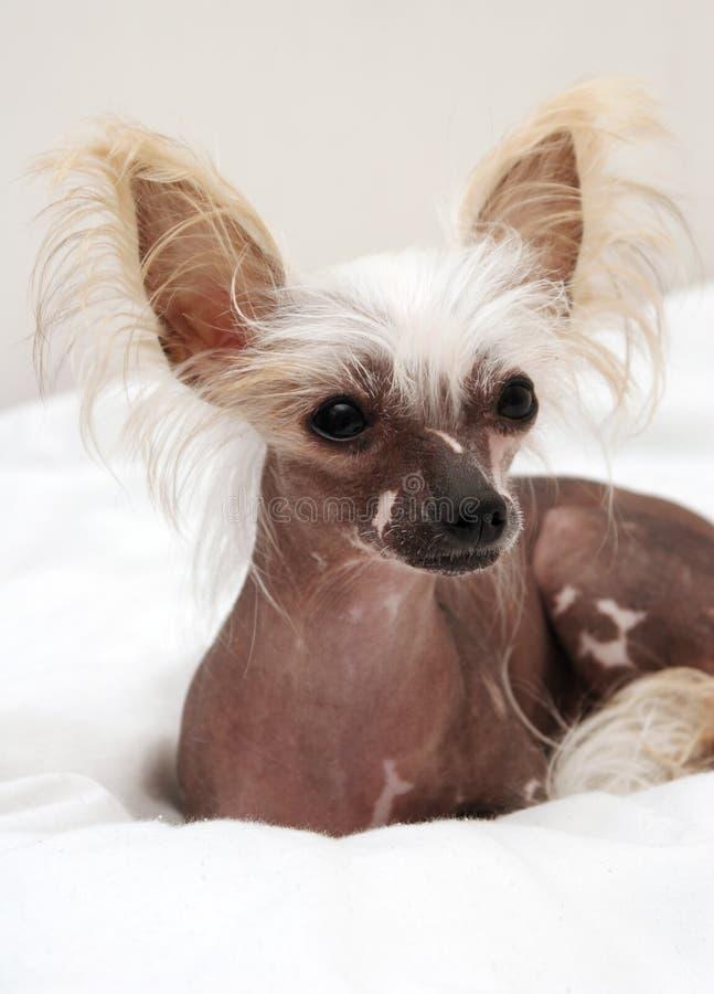 Portrait of dog royalty free stock photo
