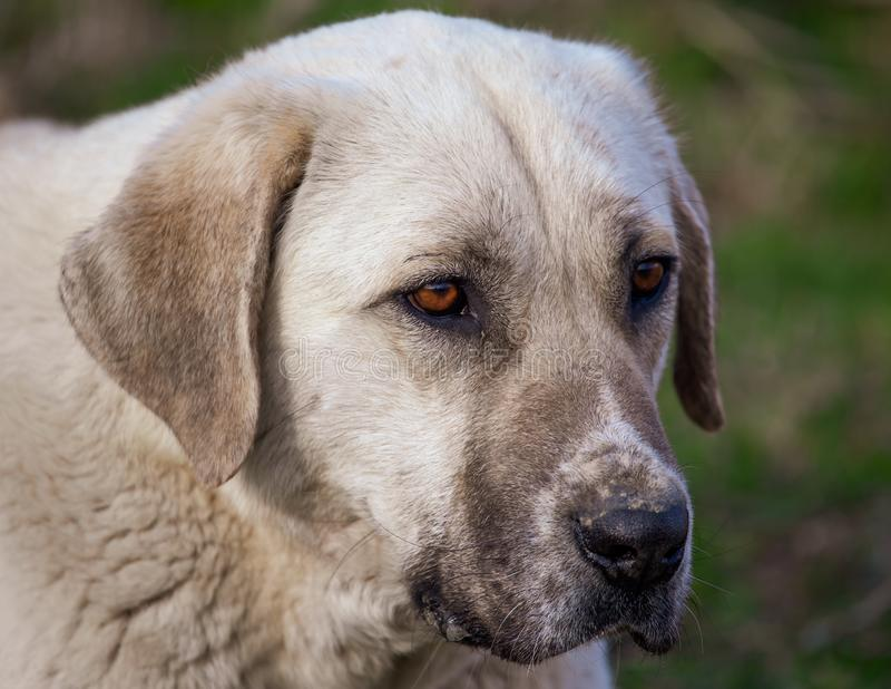 Portrait of a dog in the afternoon stock photography