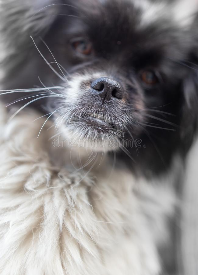 Portrait of a dog stock image