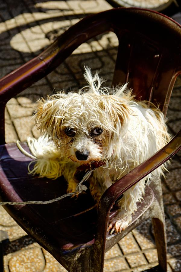 Portrait of a dog sit on the chair stock image