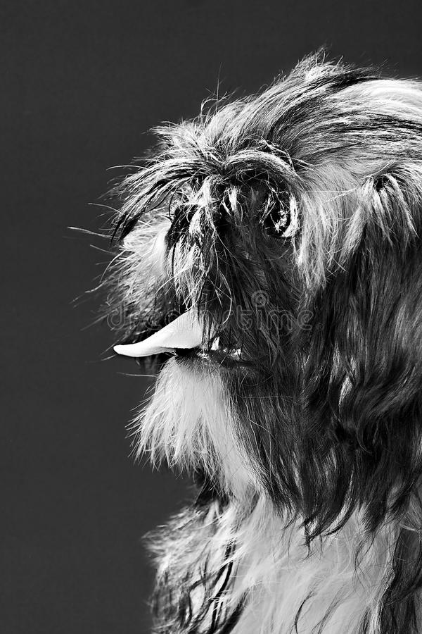 Portrait of a dog royalty free stock image