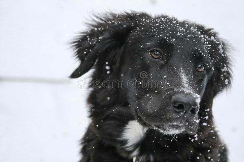 Portrait of dog in snow stock images