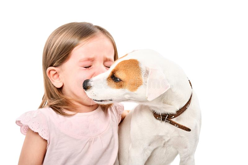 Portrait of dog, soothing little crying girl stock photography