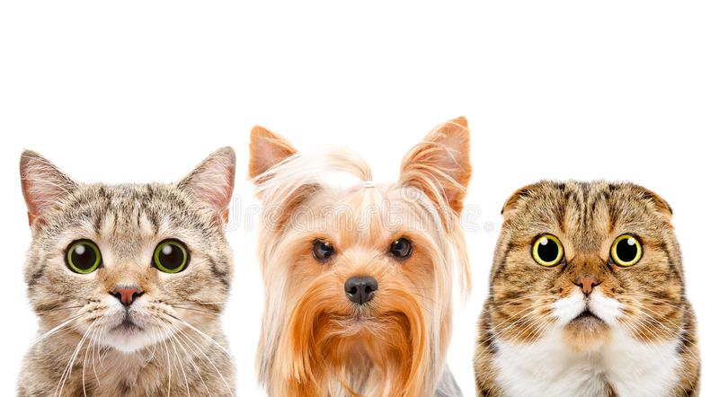 Portrait of a dog and two cats stock images