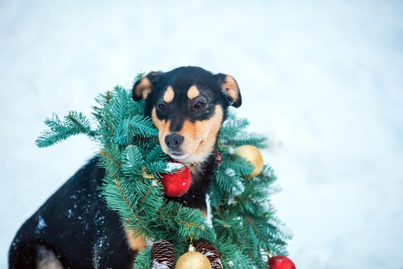 Dog wearing Christmas wreath royalty free stock photography