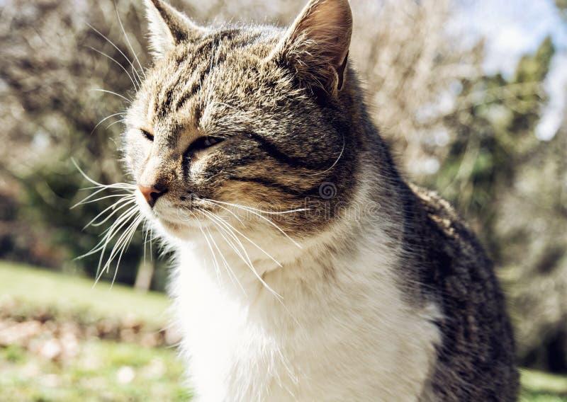 Portrait of domestic cat, animal theme. Portrait of cute domestic cat. Animal theme. Housecat royalty free stock images