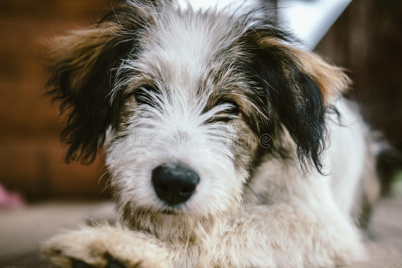 Portrait of a domestic dog in the country.  royalty free stock photos