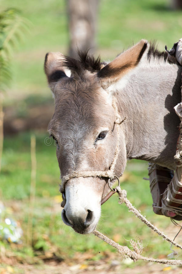 Portrait of a donkey stock photos