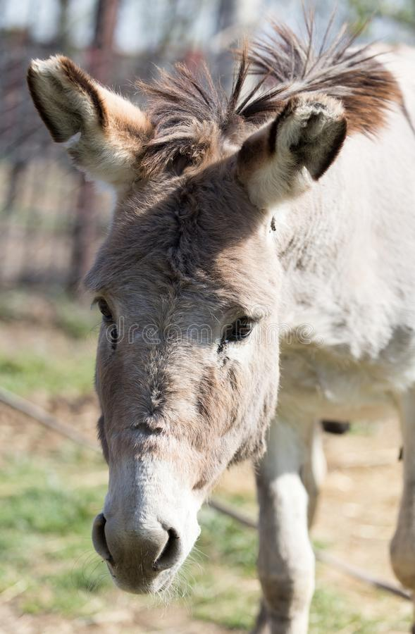Portrait of a donkey in a park on the nature royalty free stock photos